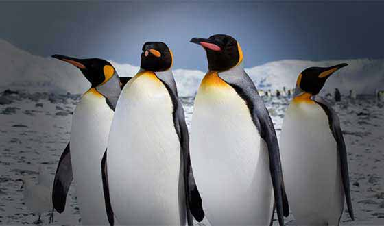 "Google Penguin Update: Over Optimization, ""Negative SEO,"" and Achieving SEO Quality"
