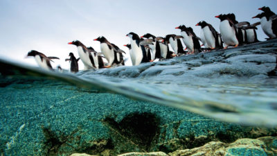 Google Penguin 4.0: Everything You Need To Know